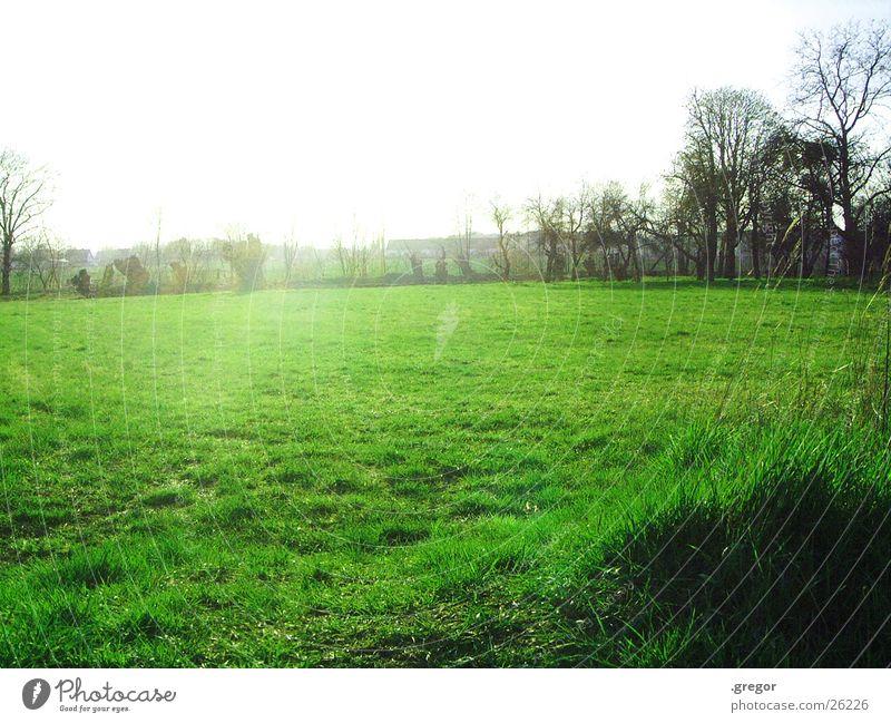 das feld ist grün Baum Sonne grün Feld blenden