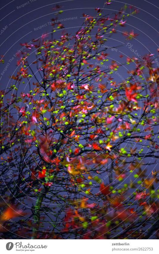 Herbstlaub am Abend Abschied Ast Baum Blatt mehrfarbig dunkel Ende Farbe Garten Traurigkeit Nacht Natur Park Trauer Pflanze Wechseln Zweig