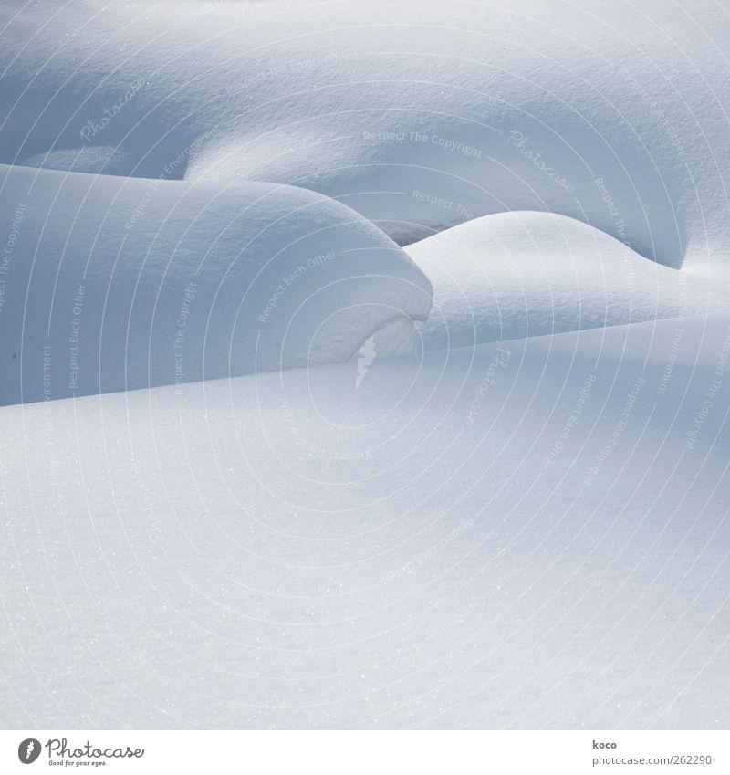 Schneewuppeln Natur blau weiß Winter Umwelt kalt hell natürlich ästhetisch einfach fest Schönes Wetter