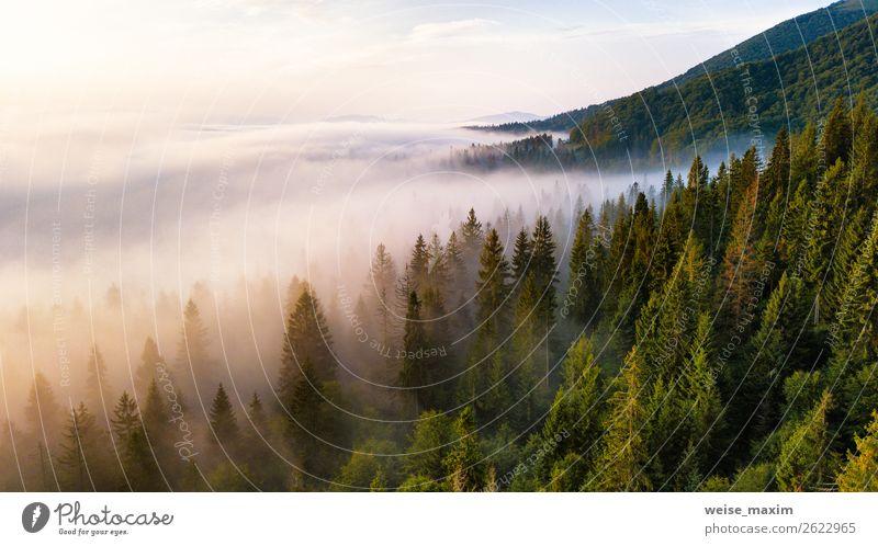 Tannenwald in Nebelwolken. Ferien & Urlaub & Reisen Sommer Berge u. Gebirge Umwelt Natur Landschaft Wolken Sonnenaufgang Sonnenuntergang Herbst Klima
