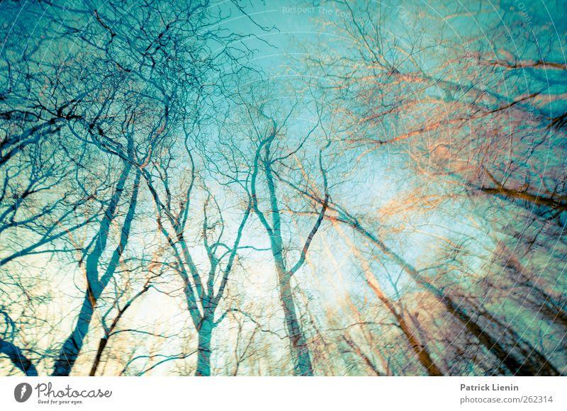 Into the trees Himmel Natur blau Baum Pflanze Wald Umwelt Landschaft Freiheit Erde Luft träumen Stimmung Wetter ästhetisch Urelemente