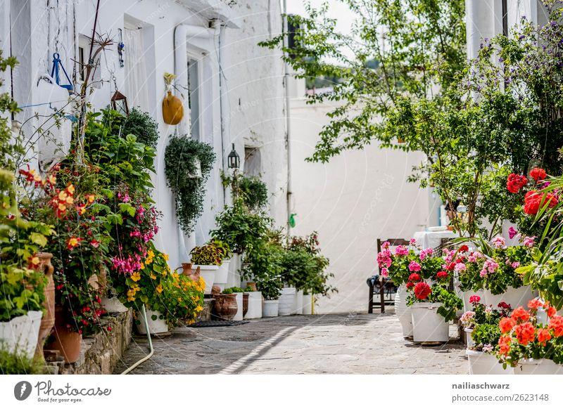 Crete in Sommer Lifestyle Ferien & Urlaub & Reisen Tourismus Ausflug Sommerurlaub Dekoration & Verzierung Natur Pflanze Baum Blume Sträucher Grünpflanze