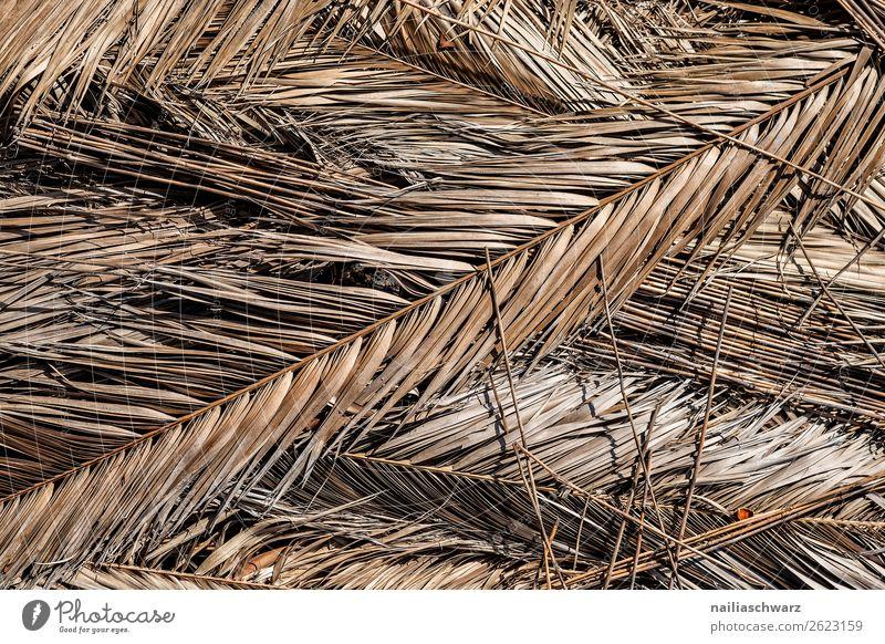 trockene Palmenblätter Ferien & Urlaub & Reisen Sommer Umwelt Natur Pflanze Sonne Wärme Dürre Blatt Palmenwedel alt natürlich braun Trauer Umweltverschmutzung