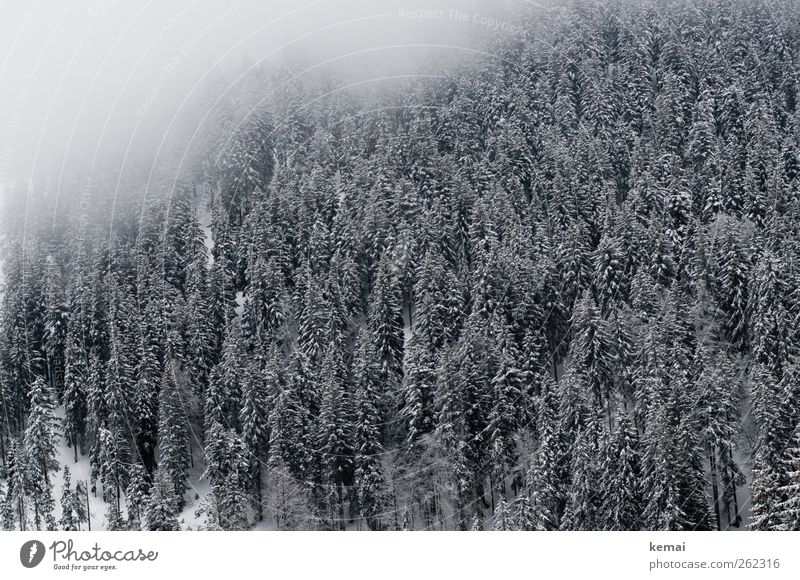 Eisiger Hauch Natur Baum Pflanze Winter Wald Umwelt Landschaft kalt Schnee Eis Nebel Klima Frost Tanne schlechtes Wetter Grünpflanze