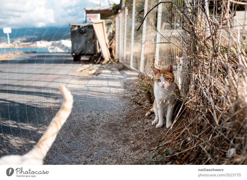 Straßenkatze Katze Ferien & Urlaub & Reisen Natur Sommer Landschaft Erholung Tier Wand Traurigkeit Küste Tourismus Mauer Ausflug sitzen Insel niedlich