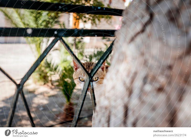 Straßenkatze Lifestyle Ferien & Urlaub & Reisen Tourismus Sommer Pflanze Baum Grünpflanze Balkon Zaun Tier Haustier Katze Tiergesicht 1 beobachten Blick Neugier