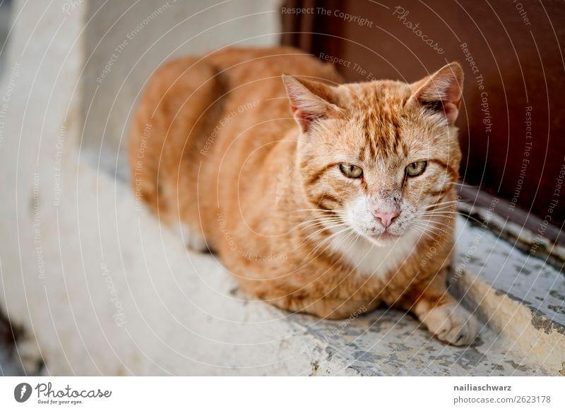 Katze alt Sommer schön weiß rot Haus Erholung Tier Wand Tourismus Mauer orange Idylle niedlich beobachten