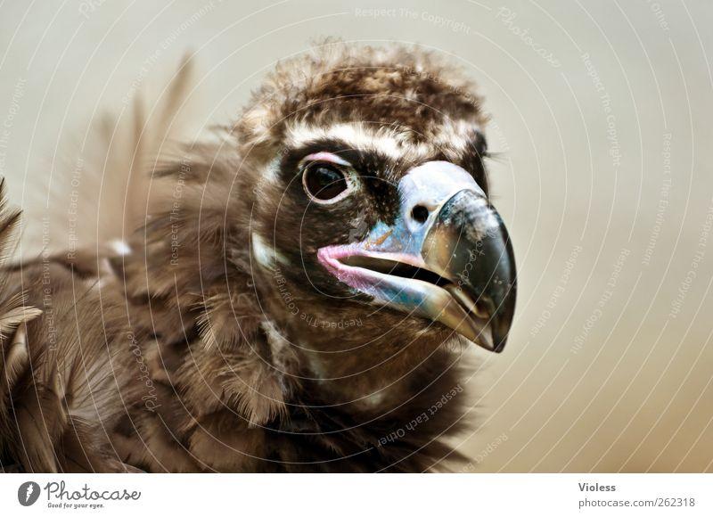 Greece....? Tier Kopf braun Vogel Kraft natürlich ästhetisch Tiergesicht Zoo Schnabel Aasfresser