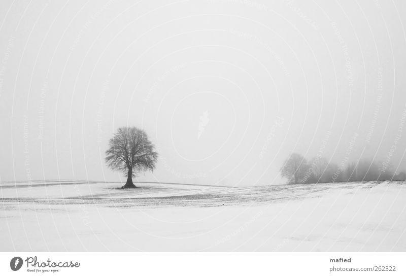 Fade To Grey Natur Landschaft Pflanze Erde Himmel Winter Wetter Nebel Eis Frost Schnee Baum Feld grau schwarz weiß Einsamkeit einzigartig Außenaufnahme