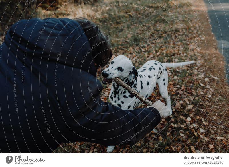 Hund Dalmatiner steht in Kornfeld Lebensfreude Stöckchen spielen Zentralperspektive Tag spielend glücklich Treue Hund und Herrchen Naturliebe Optimismus erleben