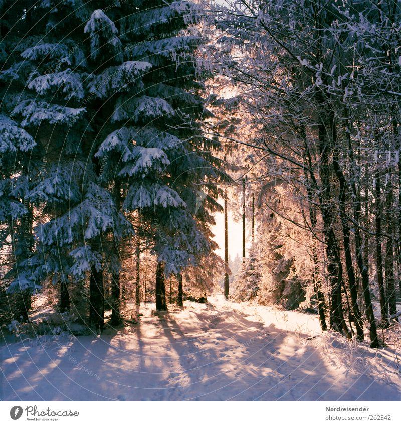 Spätwinterlich t IV Natur Pflanze Winter Farbe ruhig Wald Erholung Leben Landschaft Schnee Wege & Pfade wandern Urelemente Freundlichkeit Schönes Wetter Fußspur