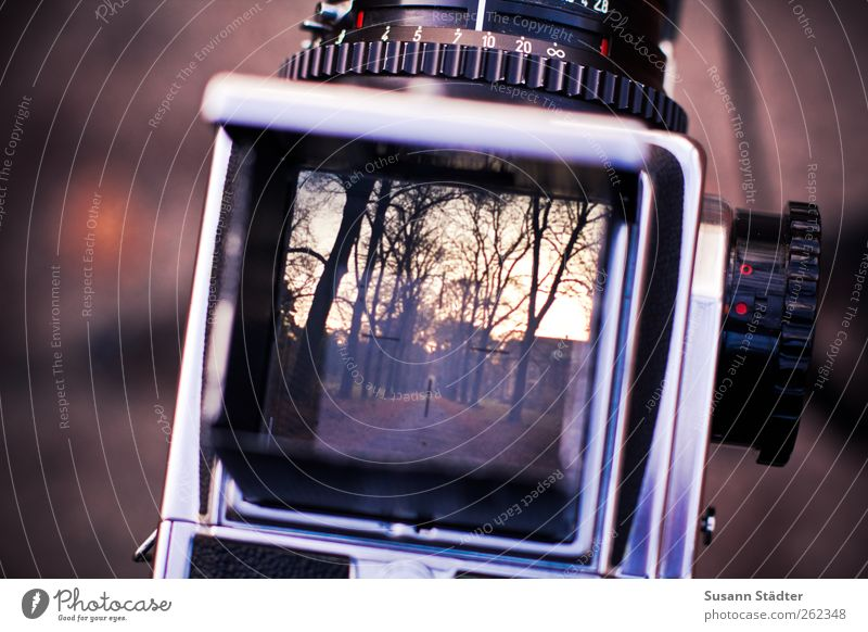 lost place. Baum ruhig Herbst Wege & Pfade Park Fotografie Fotokamera analog Anzeige Fotografieren Allee herbstlich Sucher Brandenburg Kamerawurf