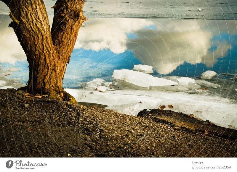 four elements Umwelt Natur Landschaft Urelemente Wasser Himmel Wolken Winter Klima Schönes Wetter Eis Frost Baum Seeufer leuchten ästhetisch außergewöhnlich