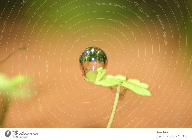 Blubber, Blubberblase, Blubberbläschen, Luftblase Wasser grün schön Pflanze Blatt oben Wärme klein Stimmung Zufriedenheit Schwimmen & Baden elegant glänzend nass ästhetisch rund