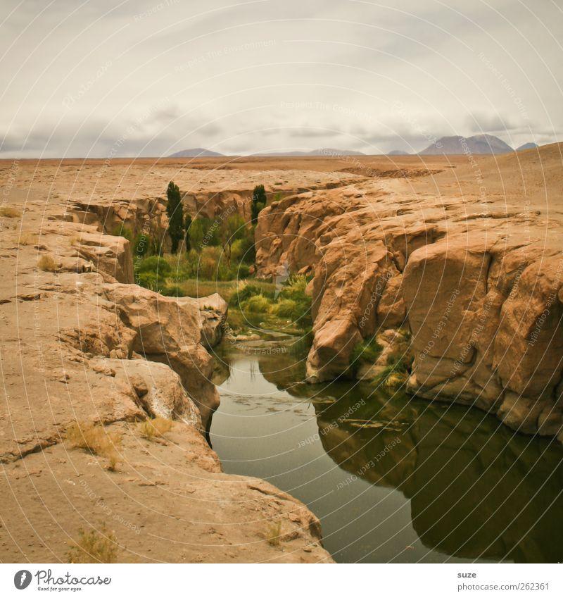 Kleine Oase Sommer Umwelt Natur Landschaft Urelemente Erde Sand Luft Himmel Horizont Klima Wetter Schönes Wetter Pflanze Felsen Fluss Wüste Stein