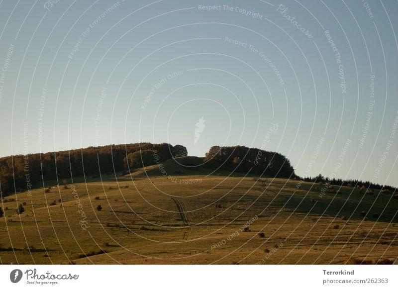 Chamansülz 2011 | wer.liebt.das.leben? Himmel blau grün schön Baum Sommer gelb Wiese Berge u. Gebirge Gras Wärme träumen Sträucher Hügel Wolkenloser Himmel
