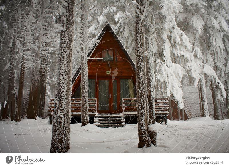 Natur Ferien & Urlaub & Reisen weiß Baum Einsamkeit Haus Winter Wald kalt Berge u. Gebirge Schnee Eis Tourismus Schutz Frost Sicherheit