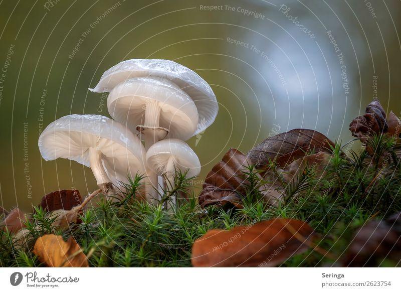 Gruppensitzung Natur Pflanze Tier Herbst Schönes Wetter schlechtes Wetter Moos Blatt Wald Wachstum Pilz Pilzhut Pilzsucher Pilzsuppe Gift essbar Außenaufnahme