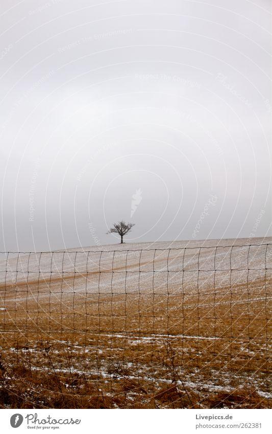 Krakow am See Natur Baum Pflanze Winter gelb Umwelt Landschaft Schnee grau Wetter Feld Zaun