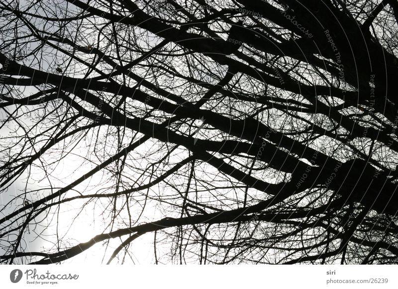 wintersonne Baum Sonne Winter kalt Stimmung Ast