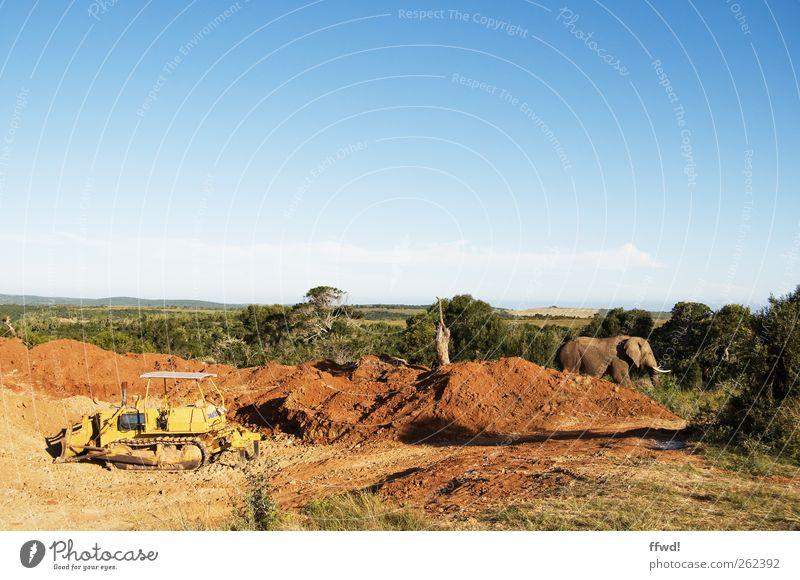 Planier & Tier Ferien & Urlaub & Reisen Ferne Safari Baustelle Umwelt Natur Erde Himmel Baum Gras Sträucher Wege & Pfade Bagger Planierraupe Wildtier Elefant 1