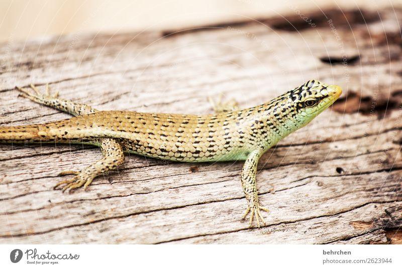 schaut mich an... Ferien & Urlaub & Reisen Tourismus Ausflug Abenteuer Ferne Freiheit Urwald Wildtier Tiergesicht Schuppen Reptil Echte Eidechsen Gecko 1