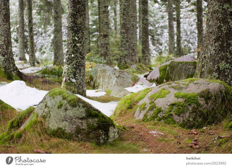 Bemooste Steine im Schwarzwald Ferien & Urlaub & Reisen Tourismus Ausflug Freiheit Fahrradtour Berge u. Gebirge wandern Natur Landschaft Pflanze Erde Herbst