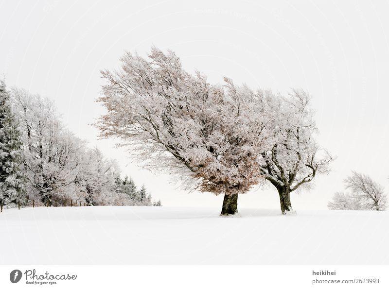 Winterwonderland - verschneite Buchen auf dem Schauinsland Ferien & Urlaub & Reisen Natur Pflanze Landschaft Baum Erholung Wald Berge u. Gebirge Schnee