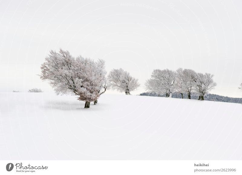 Idylle pur Ferien & Urlaub & Reisen Tourismus Ausflug Abenteuer Ferne Freiheit Winter Schnee Winterurlaub Berge u. Gebirge wandern Wintersport Umwelt Natur