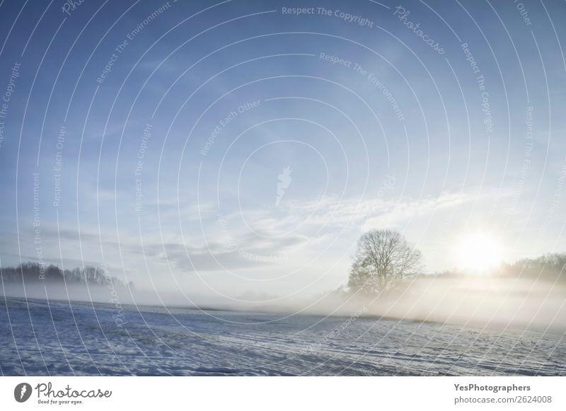 Sonnenaufgang und Nebel über dem Winter Naturlandschaft Schnee Weihnachten & Advent Landschaft Wetter Baum Wiese träumen hell natürlich weiß Deutschland