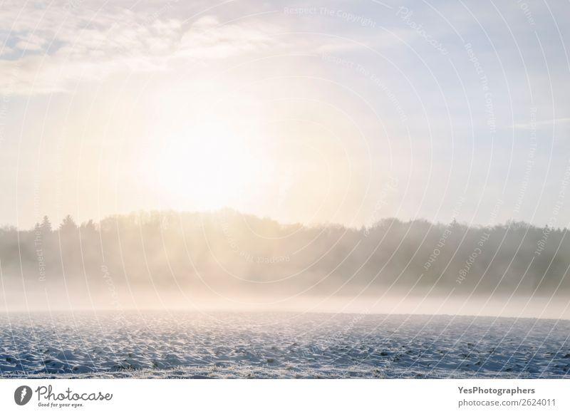 Natur Weihnachten & Advent Landschaft weiß Wald Winter natürlich Schnee Wiese Deutschland hell träumen Nebel Wetter Europa Jahreszeiten