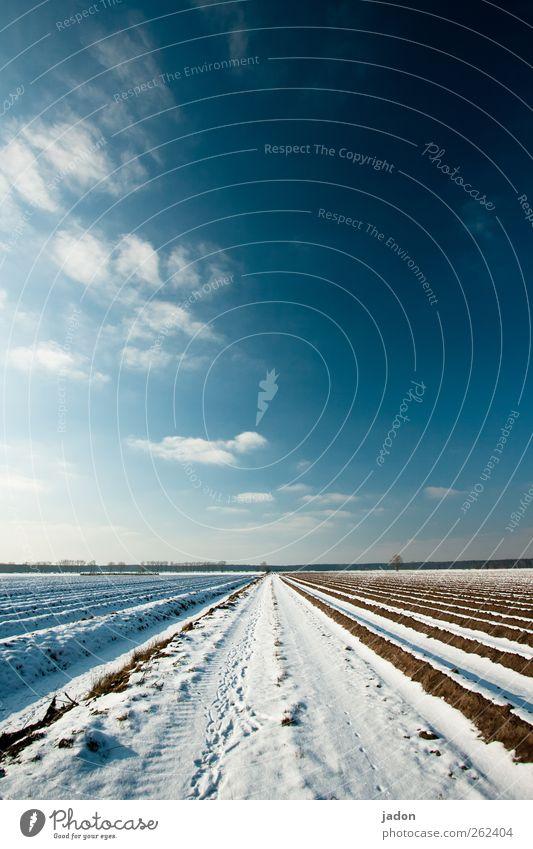 vor saison. Landschaft Himmel Wolken Horizont Winter Schnee Feld kalt blau ruhig Wege & Pfade Ferne Reihe Brandenburg Unendlichkeit Menschenleer