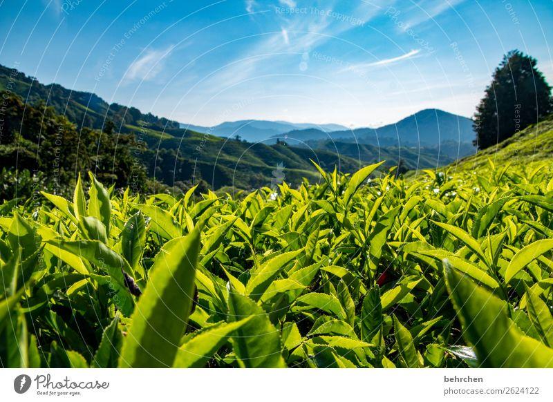 zum aufwärmen Himmel Ferien & Urlaub & Reisen Natur Pflanze grün Landschaft Baum Blatt Ferne Berge u. Gebirge Tourismus außergewöhnlich Freiheit Ausflug Feld