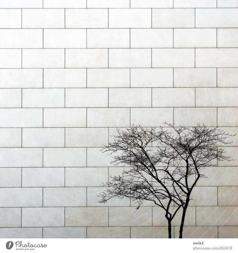 Querulant blau Stadt Baum Pflanze Winter Einsamkeit Haus Wand Holz grau Mauer Stein hell Fassade authentisch Wachstum