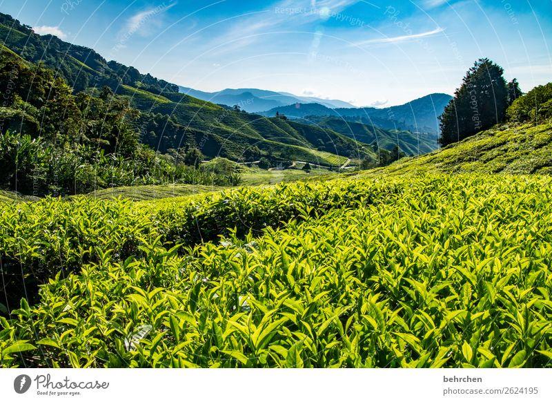 sonntagsfrühstückstee| tischlein deck dich Himmel Ferien & Urlaub & Reisen Natur Pflanze blau grün Landschaft Baum Blatt Ferne Berge u. Gebirge Tourismus