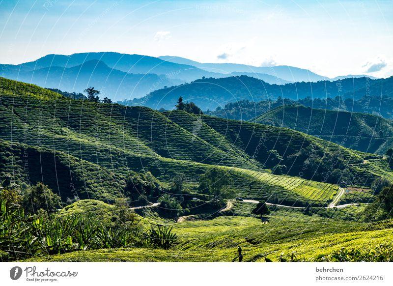 gute-nacht-tee Himmel Ferien & Urlaub & Reisen Natur Pflanze schön grün Landschaft Baum Ferne Berge u. Gebirge Tourismus außergewöhnlich Freiheit Ausflug Feld