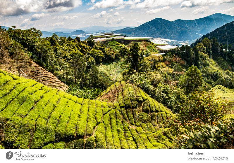 draußen nur kännchen Ferien & Urlaub & Reisen Tourismus Ausflug Abenteuer Ferne Freiheit Natur Landschaft Pflanze Baum Sträucher Nutzpflanze Teepflanze