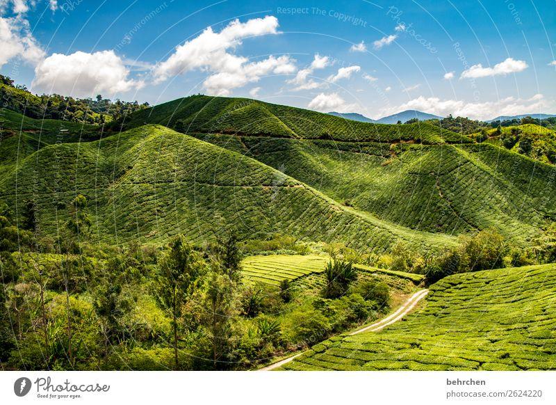 tee mit aussicht Himmel Ferien & Urlaub & Reisen Natur Pflanze schön grün Landschaft Baum Wolken Blatt Ferne Berge u. Gebirge Tourismus außergewöhnlich Freiheit