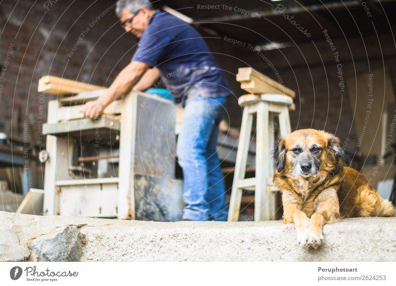 Professioneller Zimmermann mit seinem kleinen Hund. Lifestyle Freizeit & Hobby heimwerken Küche Arbeit & Erwerbstätigkeit Handwerker Baustelle Mann Erwachsene