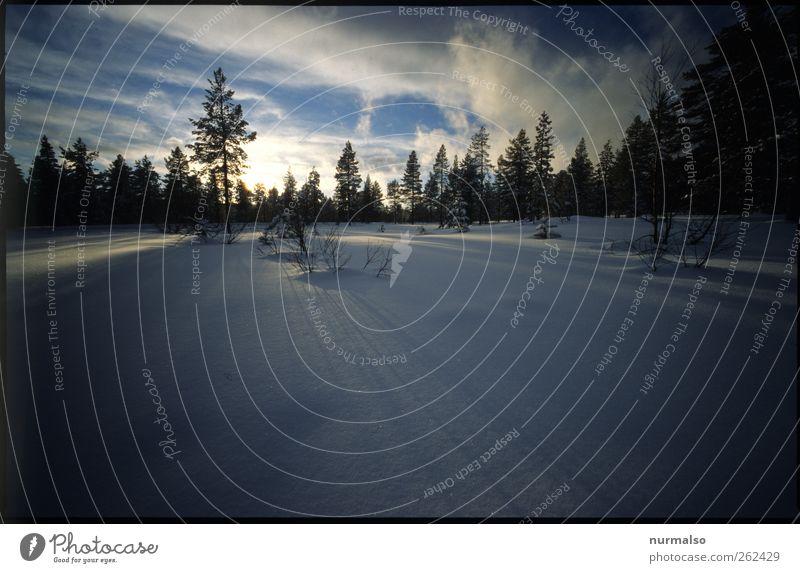 Winterabschied Himmel Natur Baum Ferien & Urlaub & Reisen Wald Ferne Erholung Landschaft Schnee träumen Stimmung Horizont Eis Freizeit & Hobby Klima