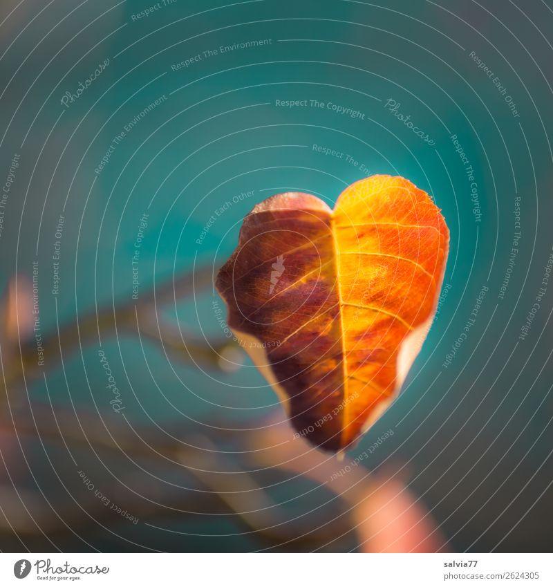 Herbstfärbung Natur Pflanze Baum Sträucher Blatt Zweige u. Äste leuchten ästhetisch blau braun gelb Wandel & Veränderung Oktober herbstlich Blattadern Farbfoto