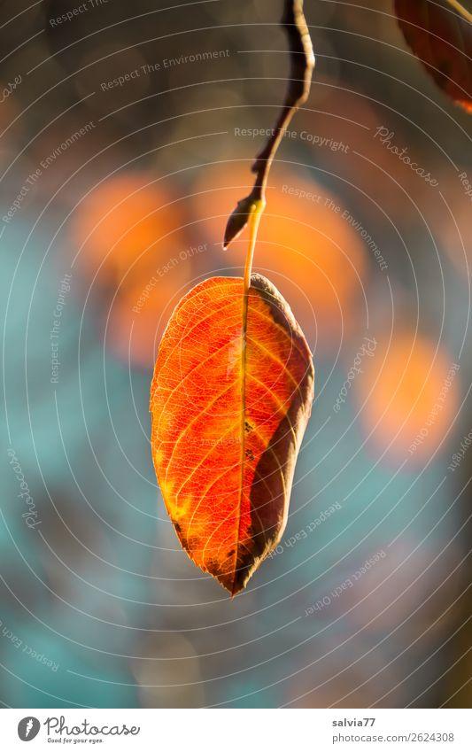gelborange Umwelt Natur Pflanze Herbst Sträucher Blatt Zweig Blattadern Herbstfärbung Park Wald leuchten ruhig Wandel & Veränderung Oktober Farbfoto