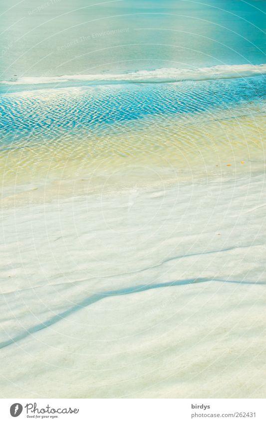 Klar und kühl Natur Wasser Winter Klima Schönes Wetter Eis Frost Seeufer ästhetisch authentisch frisch hell kalt positiv schön blau weiß Reinheit rein Klarheit