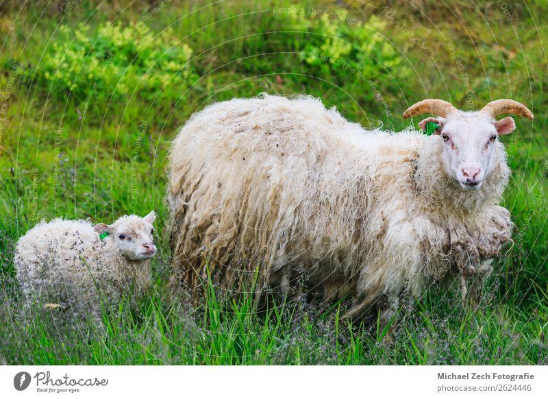 Natur Jugendliche grün Landschaft weiß Wolken Tier Berge u. Gebirge Erwachsene natürlich Wiese Familie & Verwandtschaft Gras Menschengruppe Baby niedlich