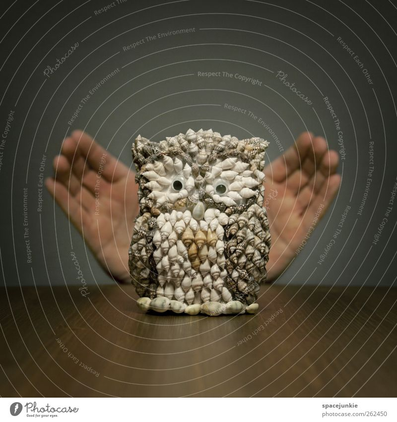 Eule außergewöhnlich Finger Dekoration & Verzierung einzigartig niedlich Kitsch Spielzeug skurril Überraschung Figur Skulptur Muschel Humor Eulenvögel imitieren