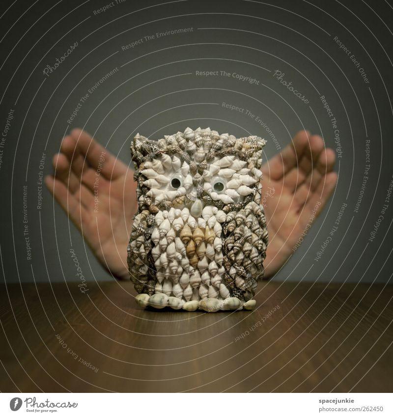 Eule Spielzeug einzigartig Kitsch niedlich Überraschung Humor skurril Finger Eulenvögel Muschel Skulptur Dekoration & Verzierung Farbfoto Innenaufnahme
