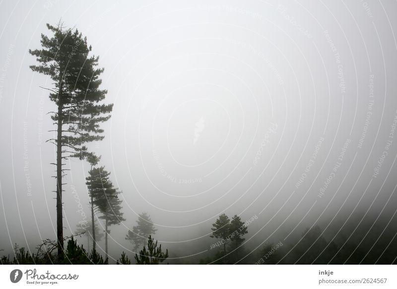 Nebelwald Umwelt Natur Landschaft Herbst Winter schlechtes Wetter Baum Wald Nadelwald dunkel Stimmung Idylle Dunst karg trist Farbfoto Gedeckte Farben
