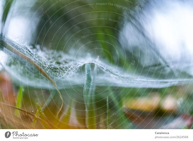 Leicht umsponnen Umwelt Natur Pflanze Wassertropfen Winter Eis Frost Gras Halm Garten Wiese Spinnennetz hängen schön kalt braun grün orange silber Stimmung