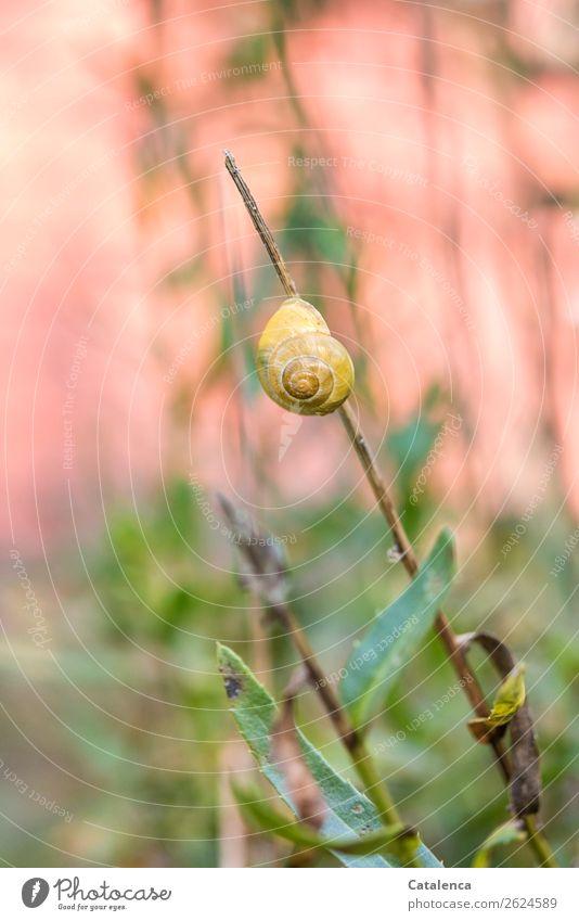 Verharren Natur Pflanze Tier Herbst Blume Blatt Margerite Garten Schnecke 1 Schneckenhaus hängen einfach schön gelb grün orange rosa Stimmung ruhig Ausdauer