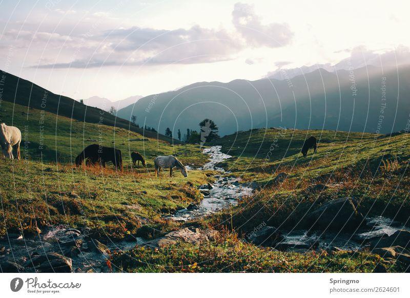 himalayaIDYLLE Natur Landschaft Wiese Hügel Berge u. Gebirge Bach Tier Pferd 4 Herde beobachten entdecken frisch Zufriedenheit schön ästhetisch Freiheit